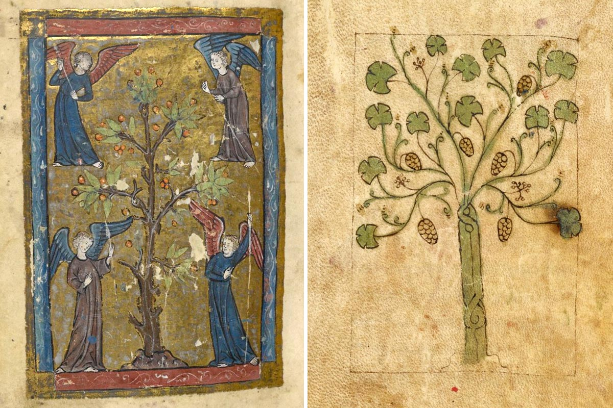 изображения деревьев в Писании