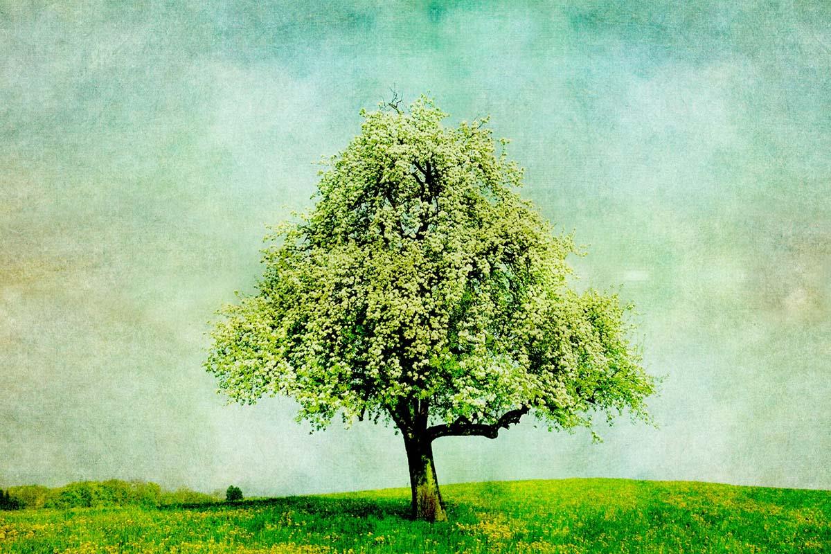 дерево, картина